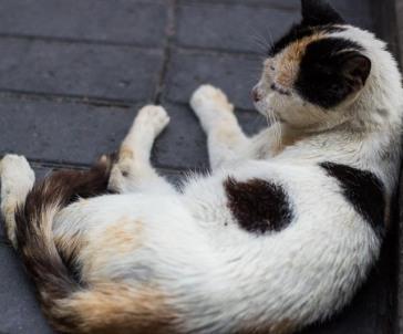 the badest kitten in Parque Kennedy