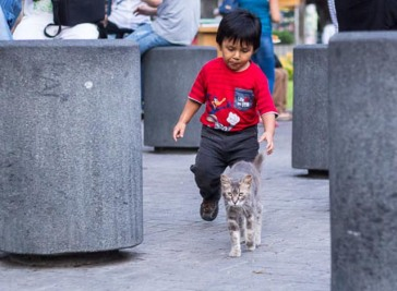 playful human in Parque Kennedy, slightly unnerved cat